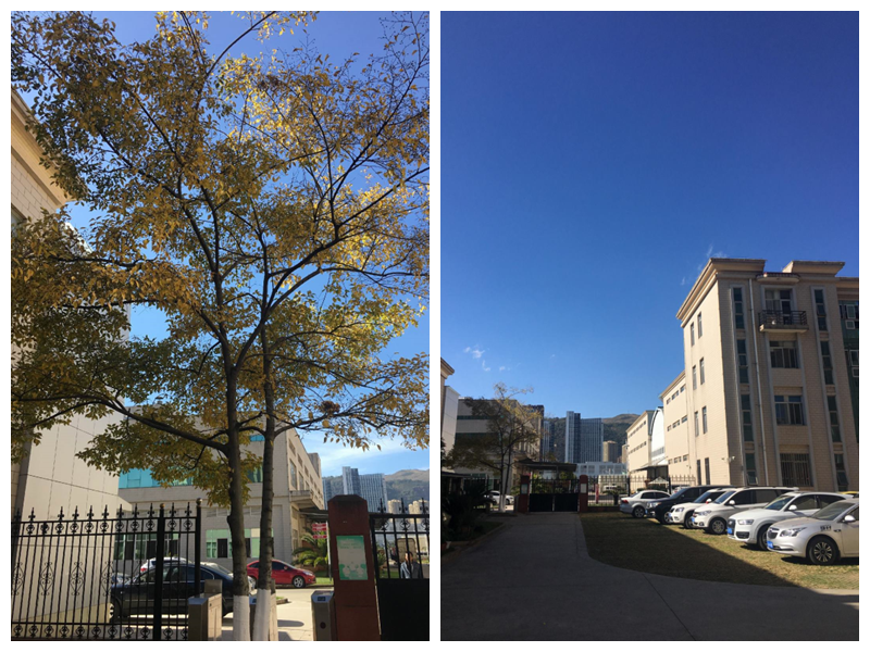 公司安静的后门和秋天的树